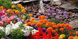 Многолетние декоративные растения – что нужно знать об их выращивании?