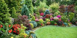 Декоративные кустарники для дачи как украшение для сада