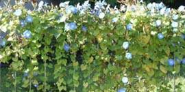 Цветы декоративные растения и кустарники