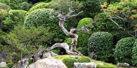Японский стиль в ландшафтном дизайне – гармония природы и человека