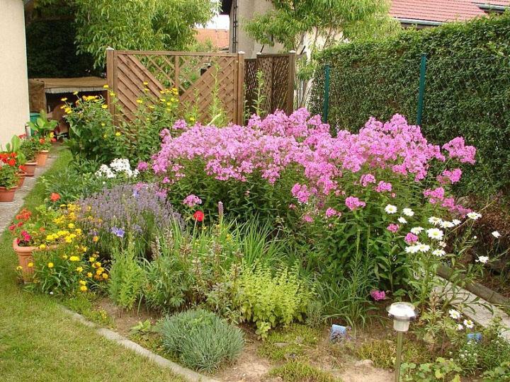 Многолетние неприхотливые цветы для сада многолетние