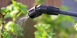 Опрыскивание винограда от болезней – вносим метки в календарь