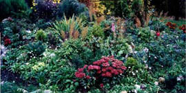 Клумба в тени – выбор растений и уход за ними
