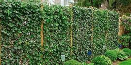 Вертикальные клумбы как одно из решений для оформления сада