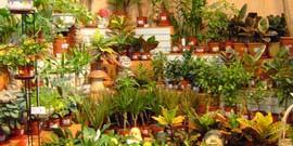 Декоративные домашние цветы – грамотный выбор и правильный уход