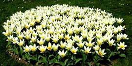 Низкорослые цветы для клумбы – создаем цветник своими руками