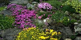 Декоративные растения – названия самых популярных цветов!
