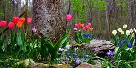 Декоративные растения для сада – как выбрать цветы, от ранней весны и до поздней осени?
