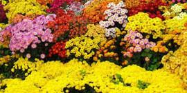 Неприхотливые цветы для сада как лучшее решение для начинающего садовода