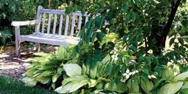 Многолетние теневыносливые цветы для сада или как организовать «теневую» сторону?