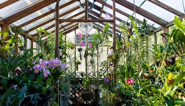 Разведение цветов в домашних условиях как бизнес