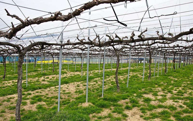 Столбы своими руками для винограда