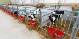 Как построить сарай для быков – дом для большой скотины