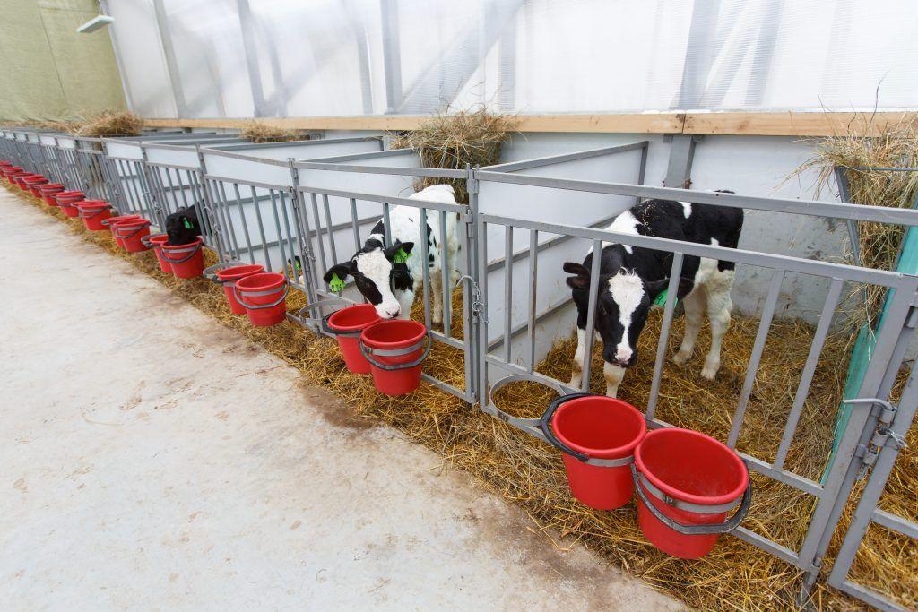 как построить сарай для скота фото приятно прикасаться этим