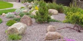 Рокарий в саду своими рукамирокарий в саду своими руками
