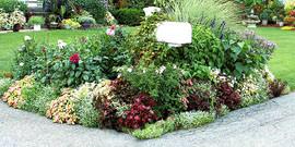 Растения для ландшафтного дизайна – их гармония и сочетания