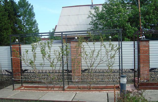 Шпалера для винограда своими руками на даче фото