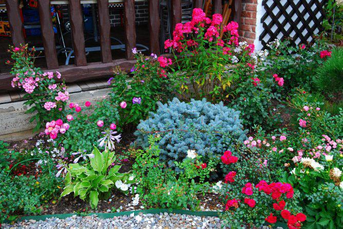Какие цветы можно посадить в палисаднике