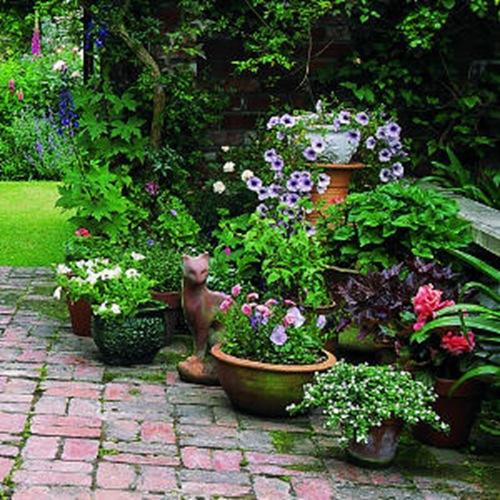 Цветы для сада и дачи грамотно