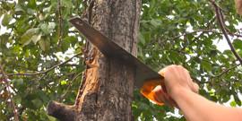 Обрезка плодовых деревьев – как сделать сад цветущим и здоровым?
