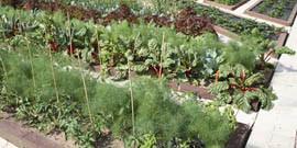 Планировка огорода и сада – порядок должен быть во всем!