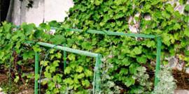 Устройство шпалеры для винограда своими руками – это нам под силу!