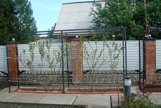 Виноград на даче своими руками фото