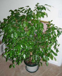 Какие растения и цветы полезны человеку: пятерка лучших!