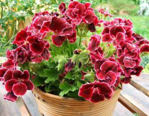 Какие растения и цветы полезны человеку: пятерка лучших! фото