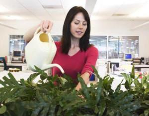 Домашнее цветоводство – комнатные растения и уход за ними