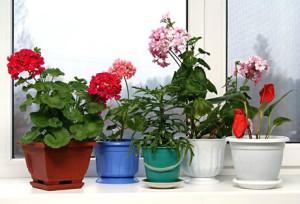 Комнатное цветоводство – выращивание и уход зимой