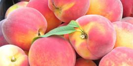 Обрезка персика весной: схема и этапы работ в подробностях!
