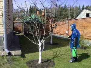 На фото - обработка яблонь весной, obrezka-sada.ru