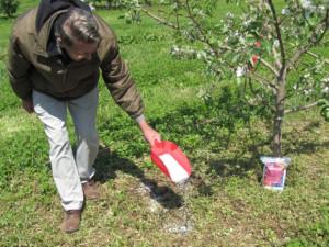 Фото подкормки яблонь весной, fb.ru