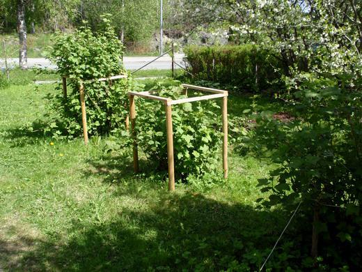 Как огородить кусты смородины своими руками фото