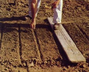 Как правильно посадить морковь весной – все дело в почве? фото