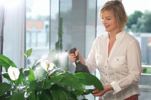 Влажность воздуха, подкормка и полив – важные показатели для растений