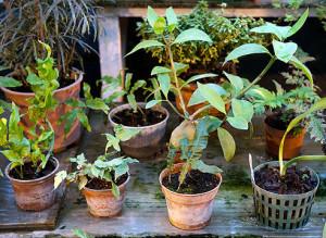 Защищаем цветы от замораживания, сквозняков и холода фото