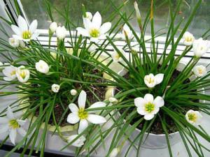 Уход за комнатными цветами зимой: работы по месяцам фото