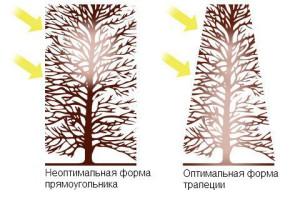 Фото правильной стрижки живой изгороди, stihl.ru