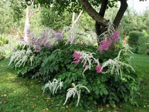 Какие цветы и растения растут на клумбе или как их сочетать?