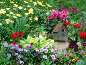 Какие цветы и растения растут на клумбе или как их сочетать? фото
