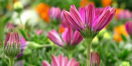 Какие цветы растут на клумбе или что выбрать для посадки в саду?