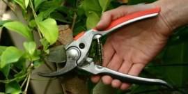 Обрезка деревьев и кустарников – как не навредить растению?