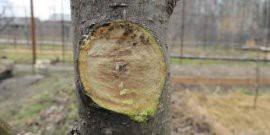 Обрезка деревьев осенью – готовим деревья к зиме!