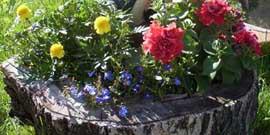 Клумбы и цветники своими руками – раскрываем секреты!