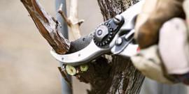 Обрезка фруктовых деревьев зимой и осенью – что важно знать?