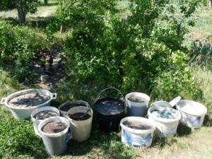 На фото - куриный помет разбавленный водой для удобрения, derevnyaonline.ru