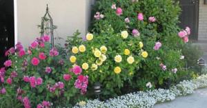 На фото - клумбы для цветов своими руками, verin-sad.ru