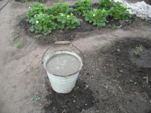 На фото - куриный помет для подкормки клубники, vkusniogorod.blogspot.com